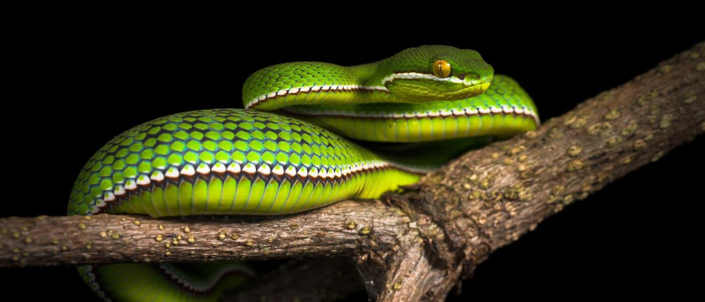 Snake exhibits at Le Bonheur
