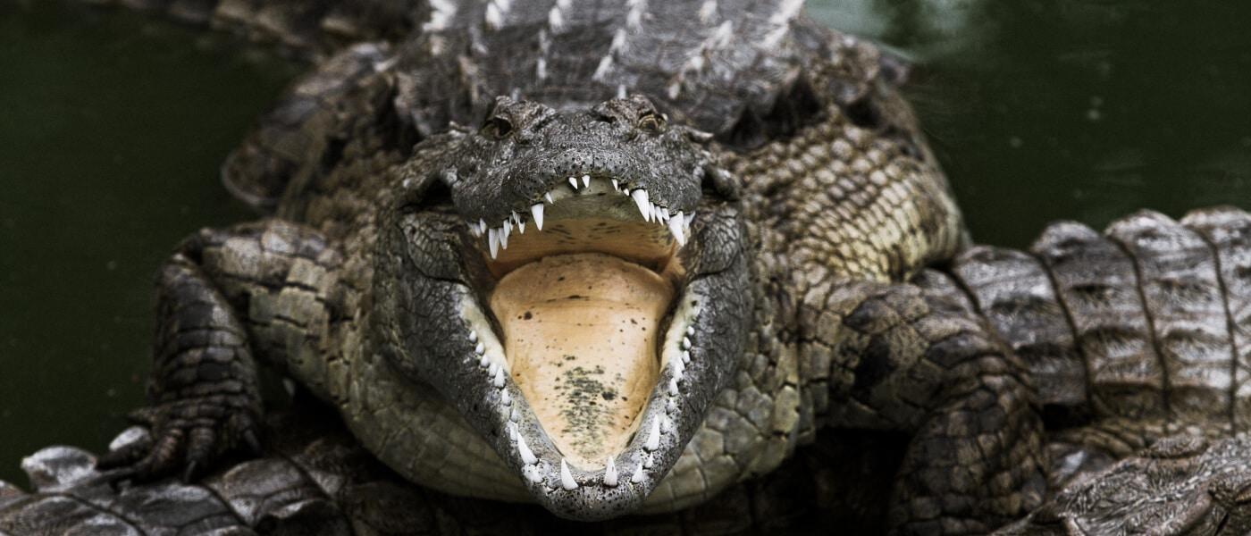 le bonheur reptile adventures